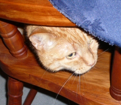 He likes to hide under tables.